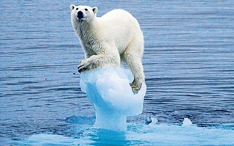 climate-change bear